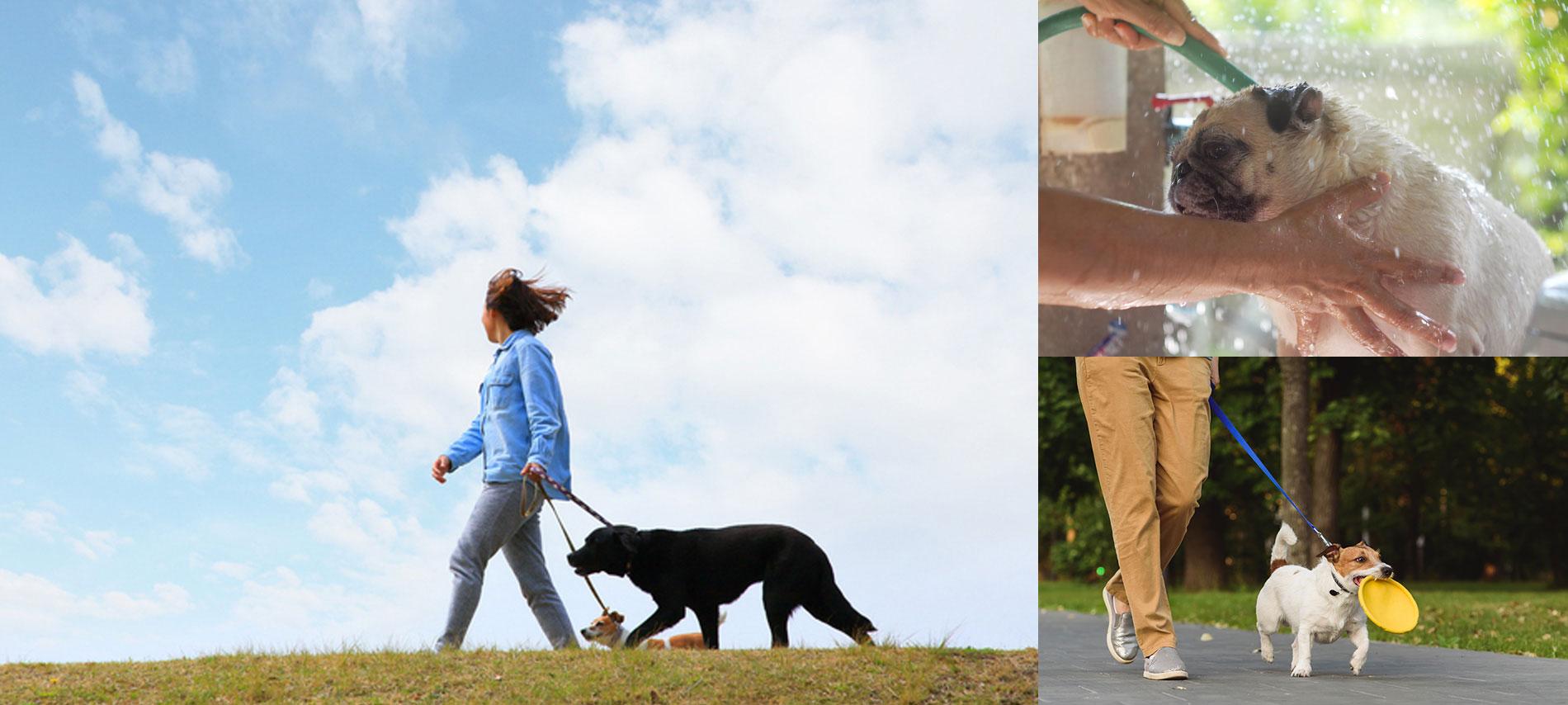 犬と暮らすビジネスセミナー