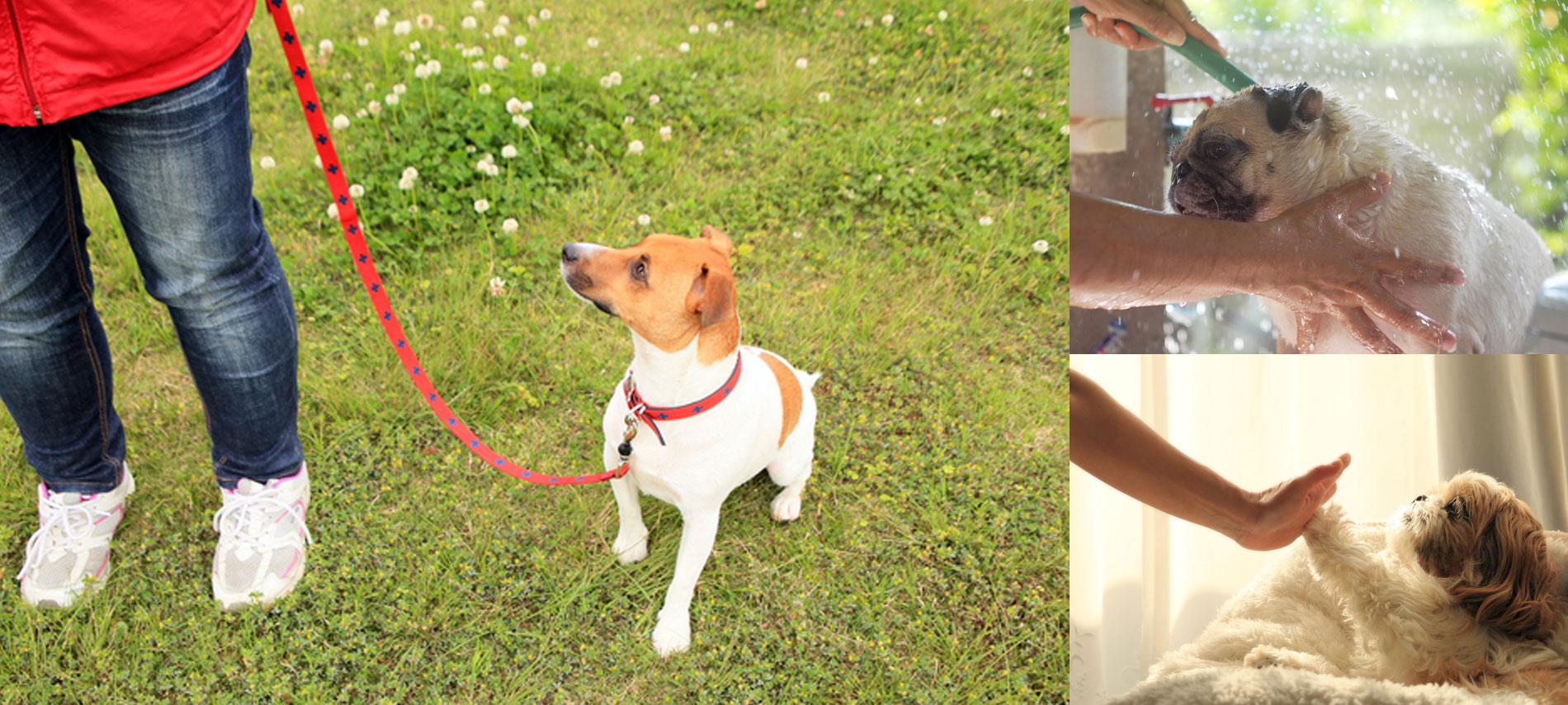 犬と暮らす オンライン・ビジネスセミナー